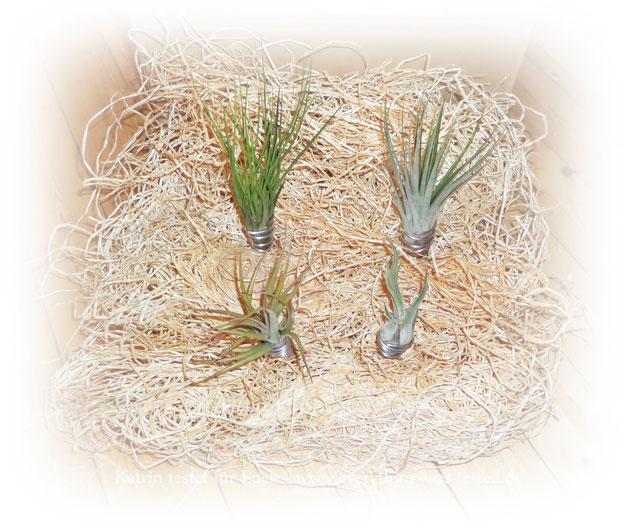 Zimmerpflanzen der anderen Art ;)
