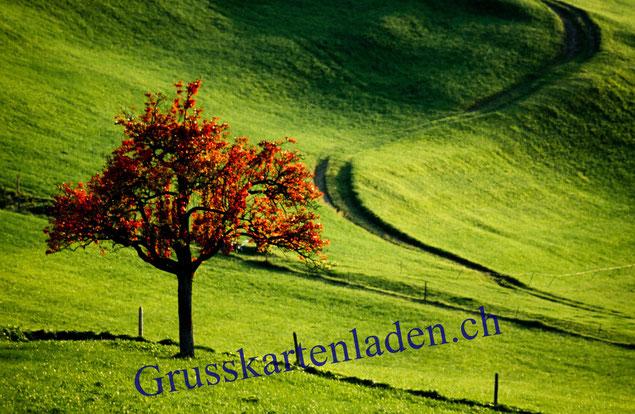 Baum Grusskarte