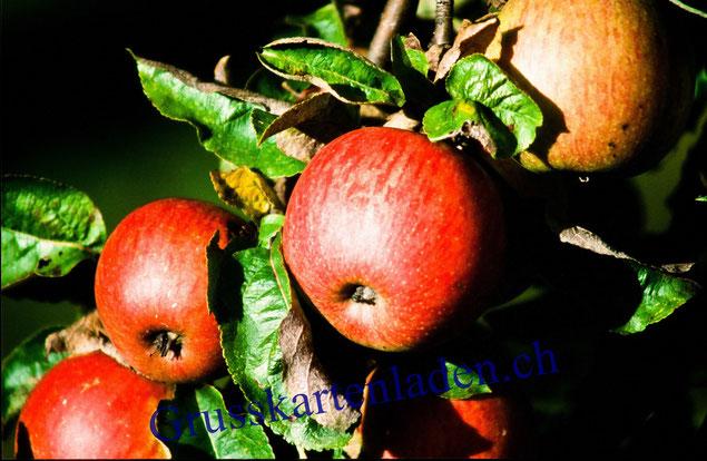 Apfel Fotokarten