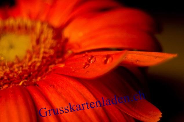 Blumen Glückwunschkarte