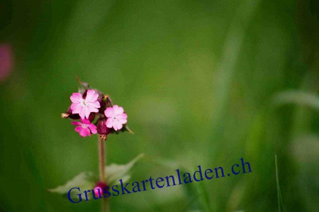Glückwunschkarte Blume