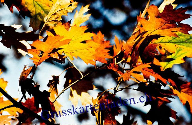 Blätter Fotokarten