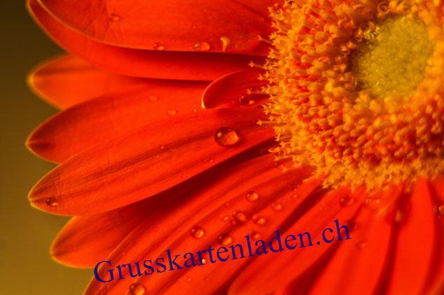 Blumen Grusskarte