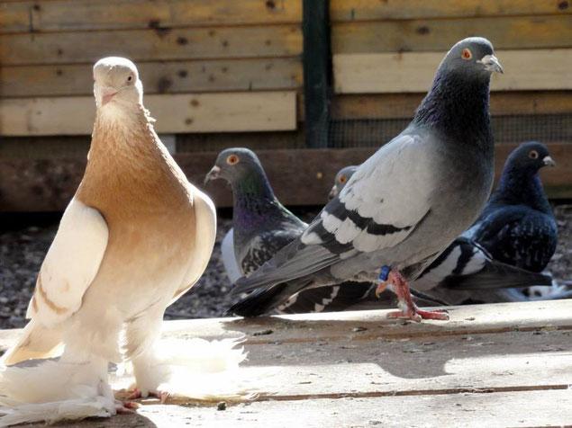 noch mehr Tauben
