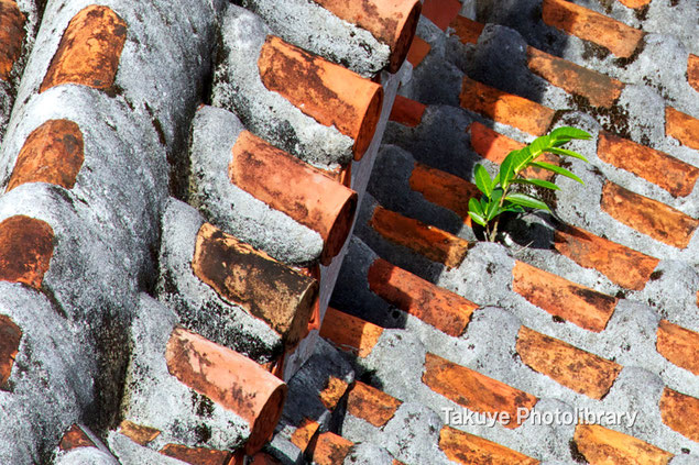 沖縄写真 赤瓦屋根 首里の風景