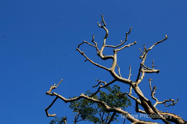 末吉の森風景 自然の造形
