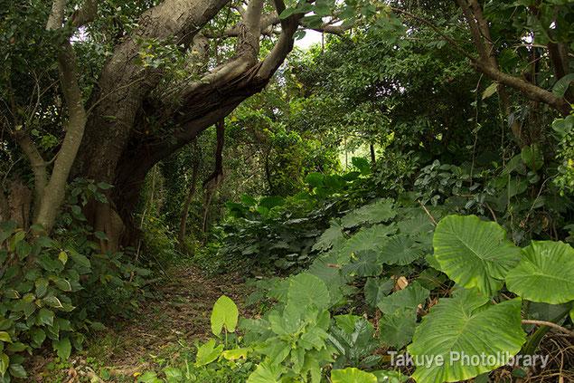 亜熱帯の森 沖縄の自然 末吉公園 沖縄写真