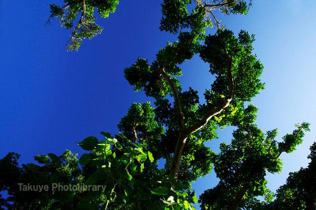 末吉の森風景