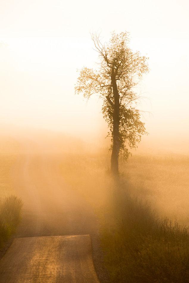 Foto Morgennebel Pfrungener Ried