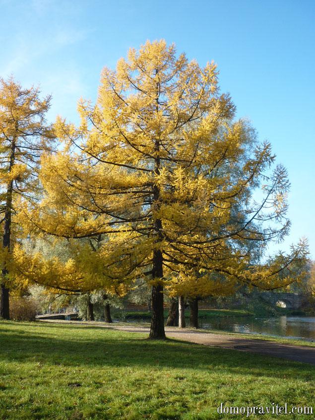Гатчинский дворцовый парк. Осень.