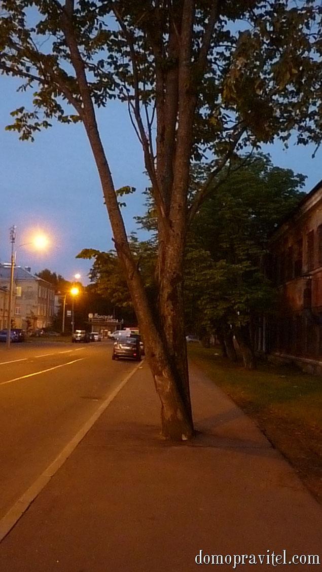 Кронштадт. ул. Петровская. Тротуар.