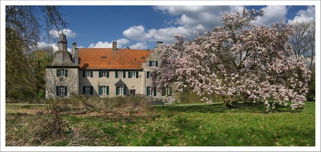 Blühender Magnolienbaum - von 1835 - vor Haus Dellwig