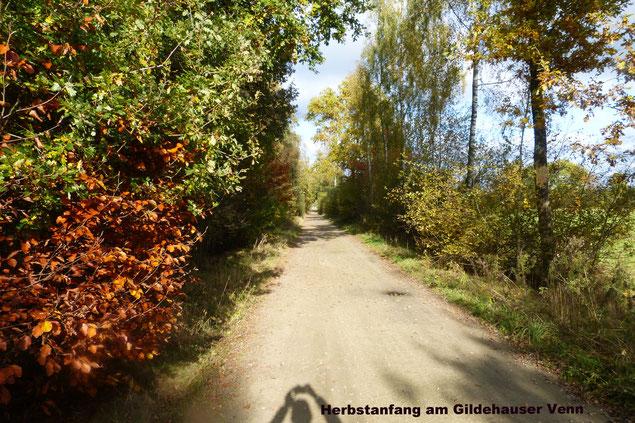 Herbstanfang - Vennweg am Gildehauser Venn