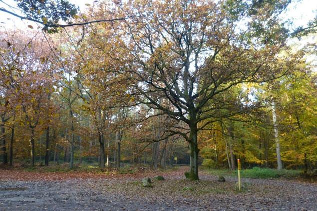 Herbst im Bentheimer Wald