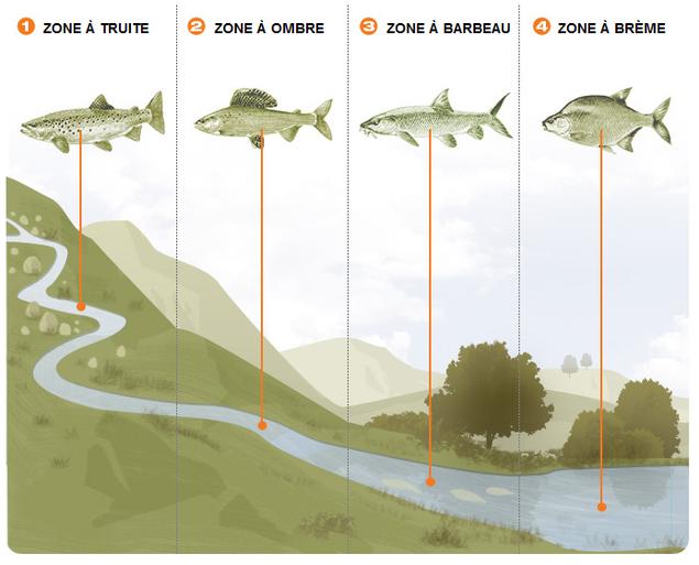 zonation piscicole répartition poissons zone truite ombre brême barbeau
