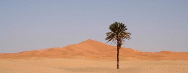 circuit vers le désert Maroc