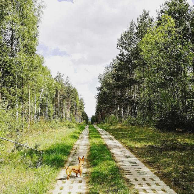 Camper mit Hund in Helmstedt