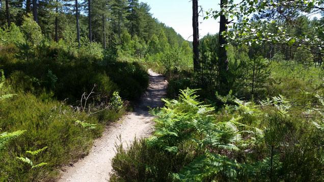 """Der Trail heißt: """"Durch den Wald"""""""