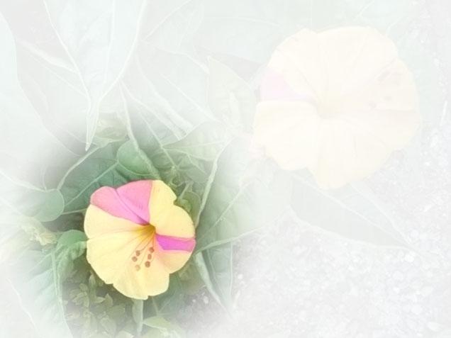 個性的な花びらを発見。