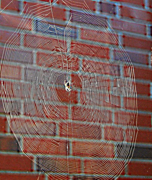 Wie ein Spinnennetz breiten sich Faszien über den gesamten Körper aus.