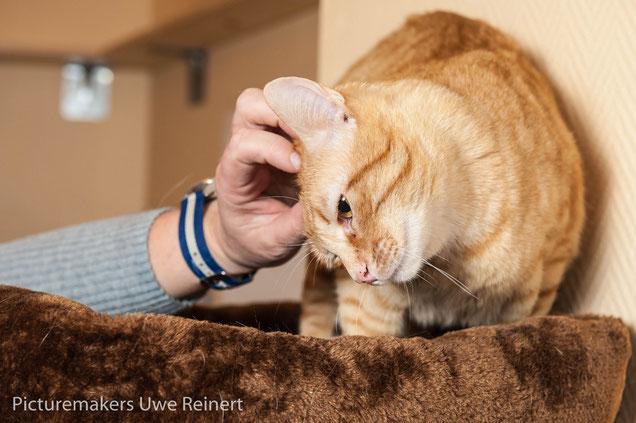 Katze Wellness liebevolle Betreuung catsitting Profi Düsseldorf