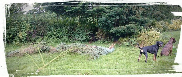 Bäume verschnitten, Hunde gucken zu ...