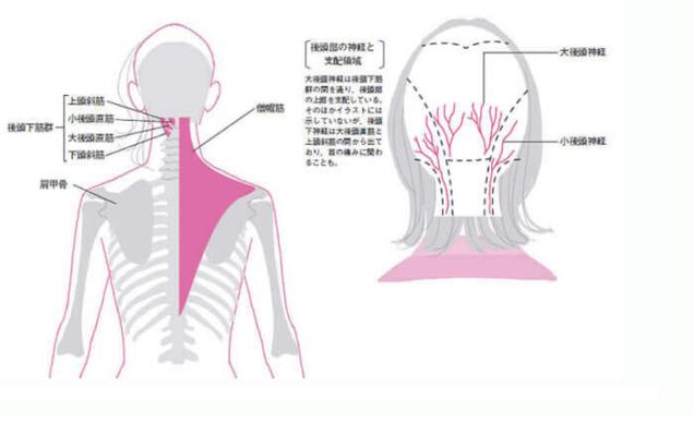 頭痛の原因のほとんどは、首と骨のズレと血行不良です。ズレと詰まりの箇所は1人1人違います。あなたの頭痛の原因と治し方を説明します。頭痛原因が知りたい方は「大分別府 頭痛専門ここまろ調整院」へ