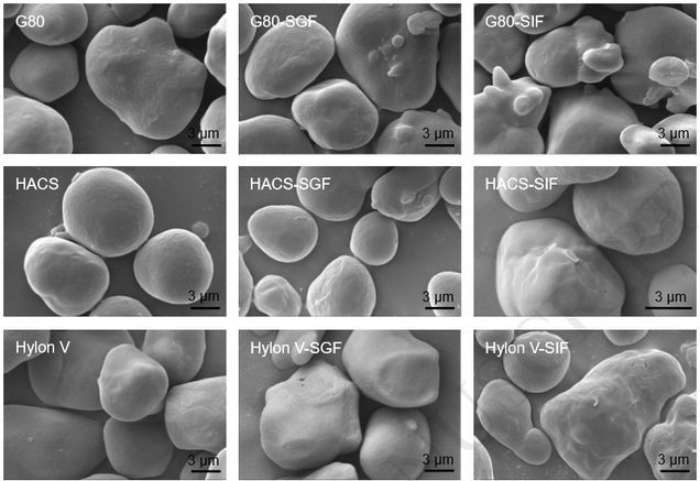 Microscopic photographs of different starch-coated microparticles for pharmaceutical use