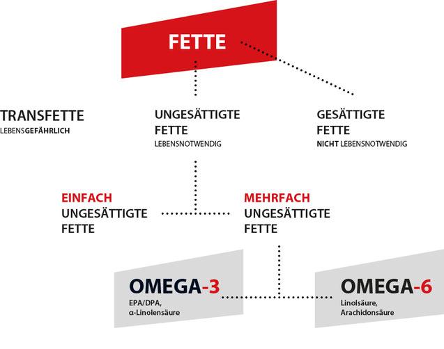 Flowchart, die die verschiedenen Fettarten beschreibt und zeigt zu welcher Omega-3 und Omega-6 gehören.