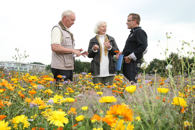 Monika Ludwig, Bernhard Krasenbrink (Imkerverein Bocholt) und Stefan Spieker (Landwirtschaftlicher Stadtverband) im Blühstreifen an der Fachhochschule Bocholt