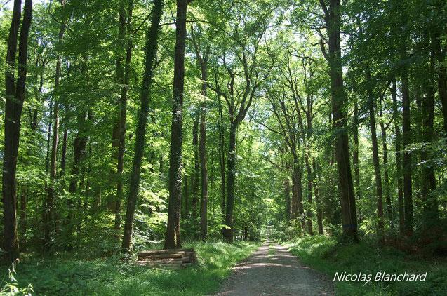 Fig1. La grande majorité des forêts domaniales de Normandie sont des forêts anciennes