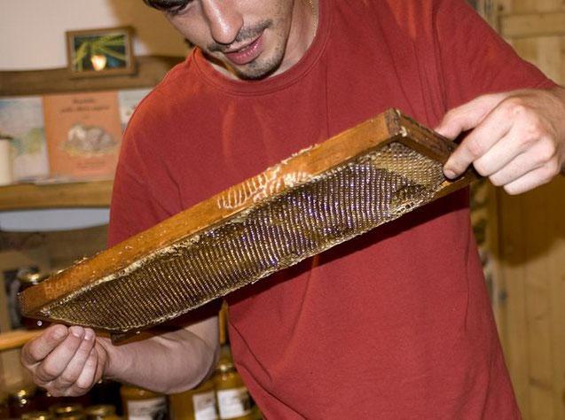 cadre de miel exrait - mission réussie - Miellerie de Bastien ALISE apiculteur en Cevennes © Nadine Vilas