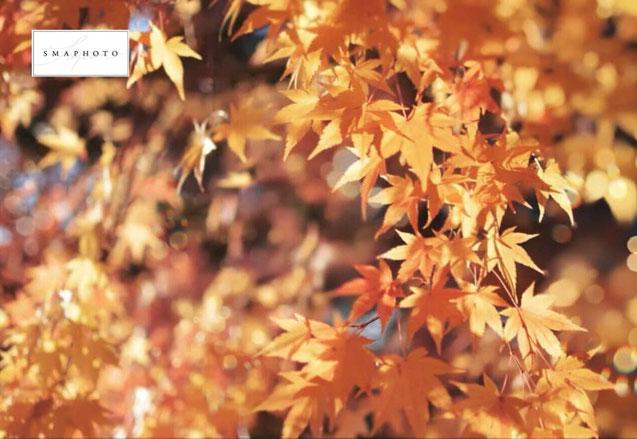スマホ写真講座 東京 玉ぼけ写真の撮り方
