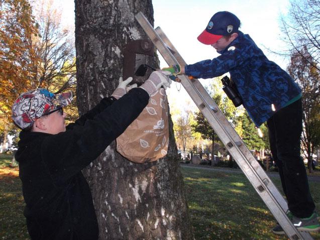 Leiter sichern, am Nistkasten anklopfen, ob jemand zuhause ist, einer putzt und einer fängt das Nest auf