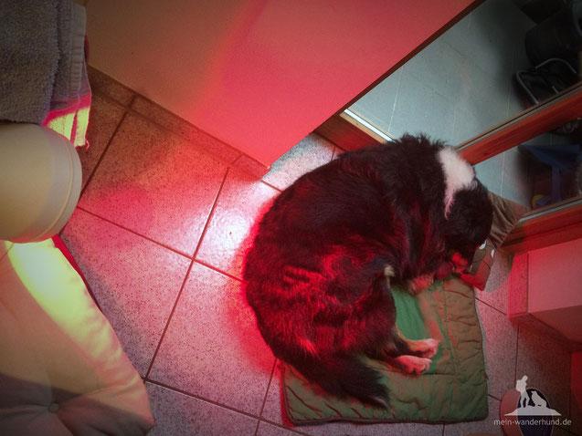 Physiotherapie für Hunde Rotlicht