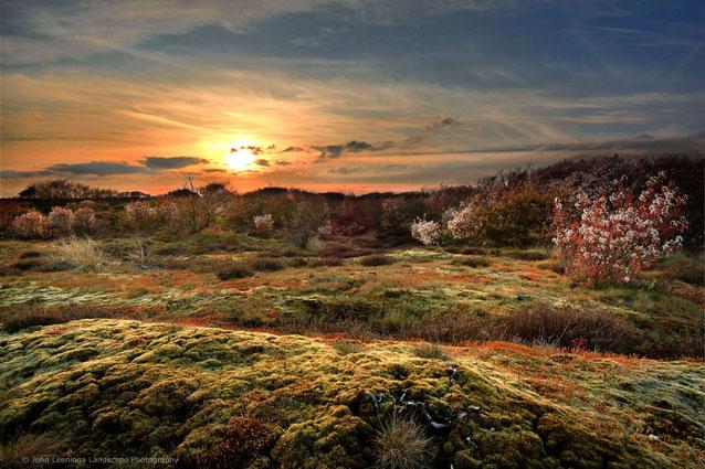 266. Texel zonsondergang met bloeiende krentenbomen in de achtergrond