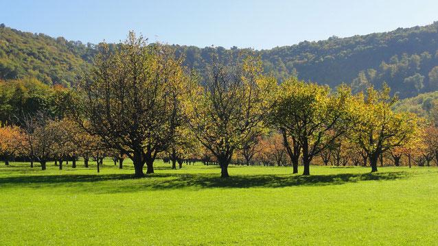 Baden Würtemberg Obstgarten