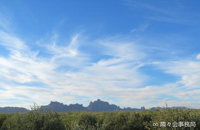 ∞ 原種ホホバプランテーションとイーグルテールマウンテン 於: アリゾナ州ハクアハラヴァレー
