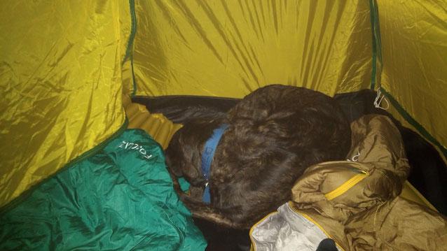 Le chien Filo à nos pieds dans la tente