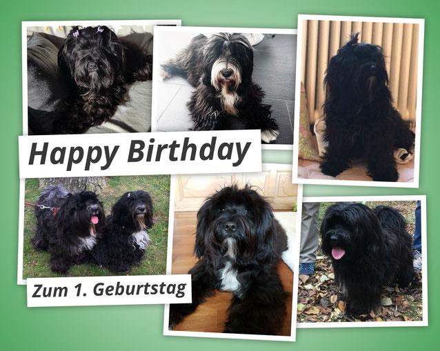 Hier feiern die H's schon ihren 1.Geburtstag :-)