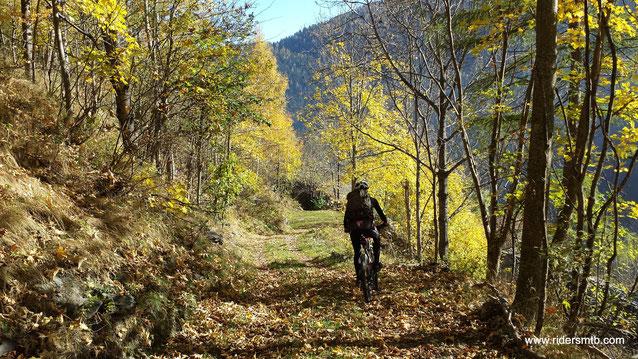 il sentiero con tappeto verde è il preludio al single track godurioso
