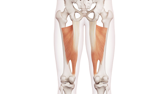 Muscoli adduttori dell'anca
