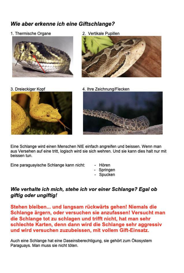 Paraguay Giftschlangen Schlangen