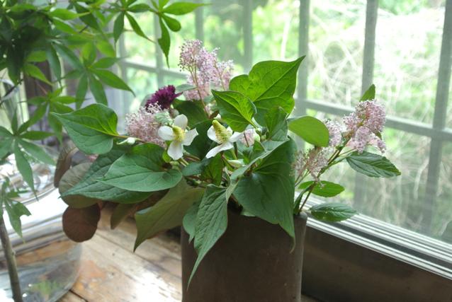 参加者の方が持ってきてくださったお庭のお花
