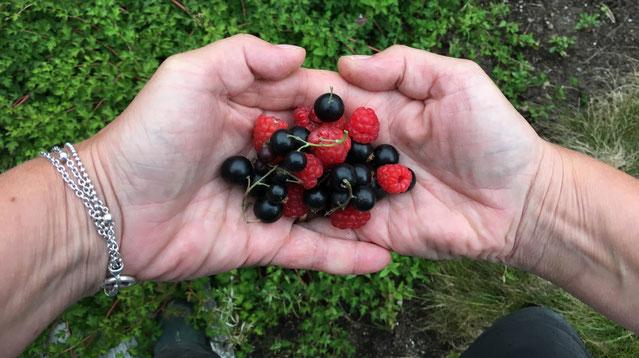 blåbær bringebær oppskrift sabayonne