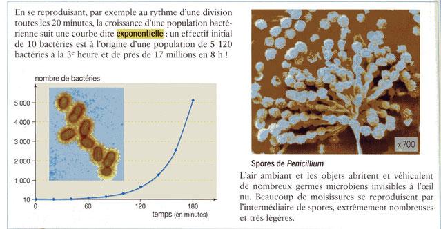 Modalités de reproduction des bactéries et champignons. Source : BORDAS 1ère ES/L p120.