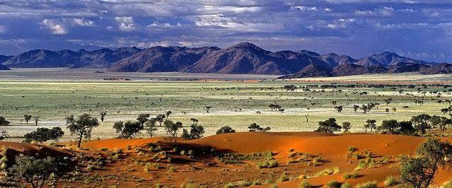 Savana africana - Fauna del Kenya