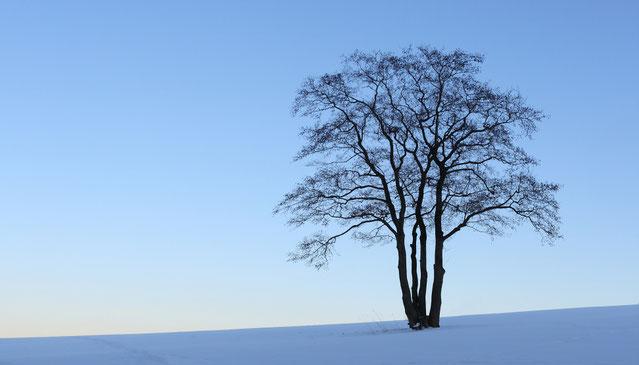 """Erzgebirge, Landschaft, Baum, Erle, Solitärbaum, """"Andreas Hielscher Fotografie"""", Naturwelten"""