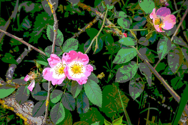 Gently Nature - rosa