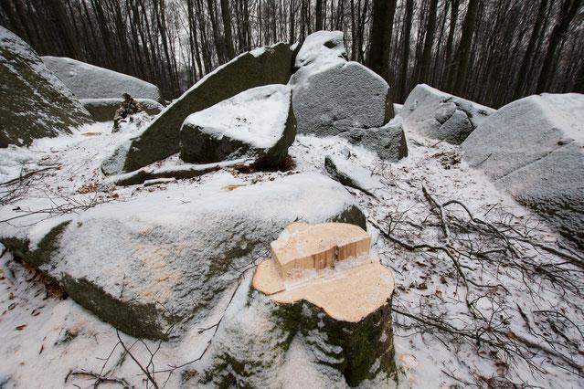 Fällung gesunder Bäume im NSG © Yvonne Albe